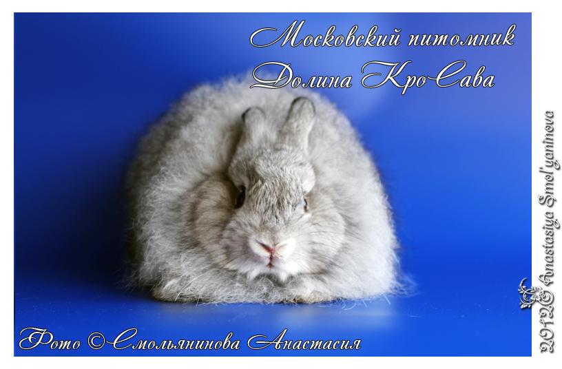 http://www.home-rabbit.ru/15062012/027.jpg