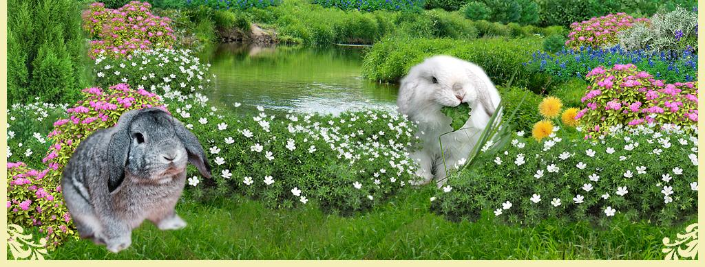 http://www.home-rabbit.ru/fon/NizZaiki.jpg