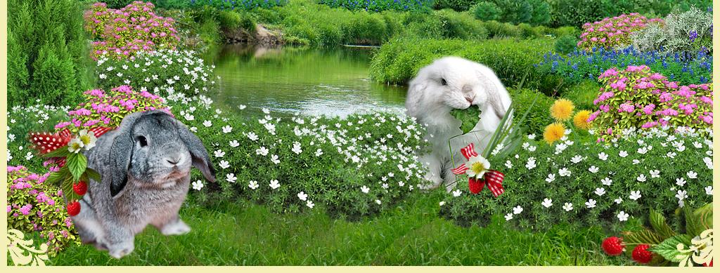 http://www.home-rabbit.ru/fon/niz2011.jpg