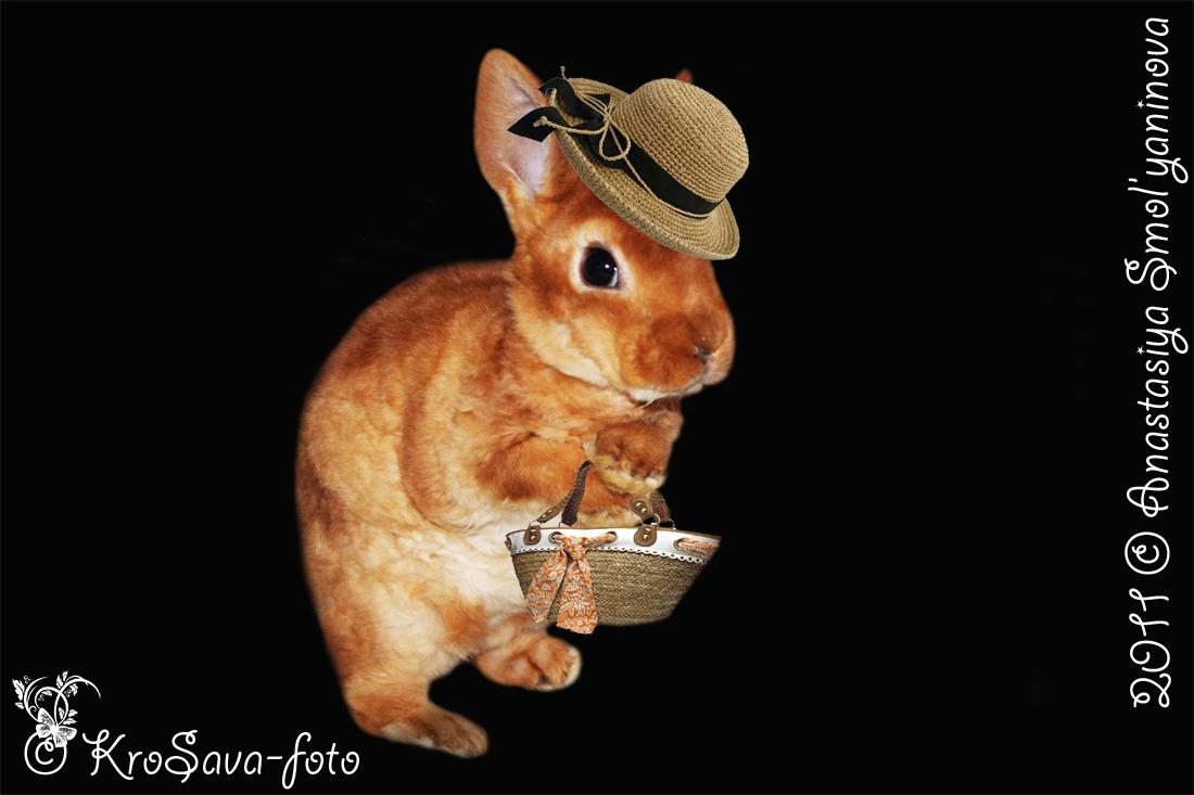 карликовые кролики: Карликовый рекс Долина КроСава