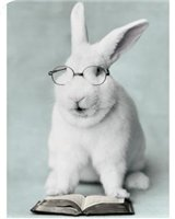 карликовые кролики: Питомник Долина КроСава