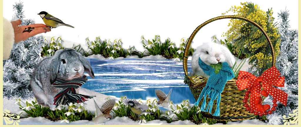 http://www.home-rabbit.ru/vesna/v7.jpg